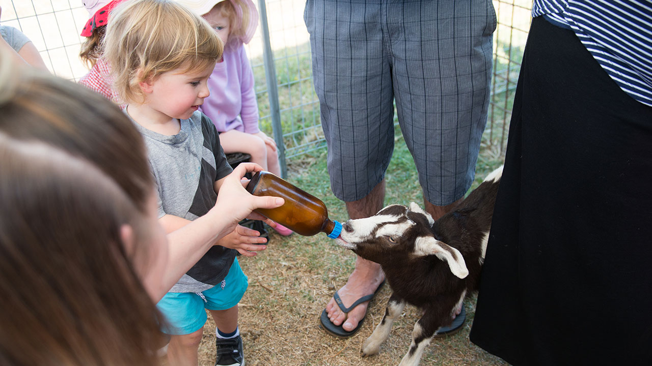 Boy Feeds Goat at Naughty Little Kids Gelato captured during filming Live Video Event Footage